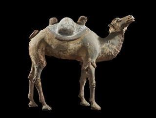 image Bactrian Camel